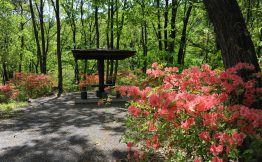 ふるさとの森公園